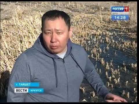 Канализационные стоки попадают в Бирюсу в Тайшете