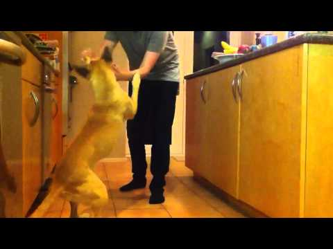 Funny dog magic trick video