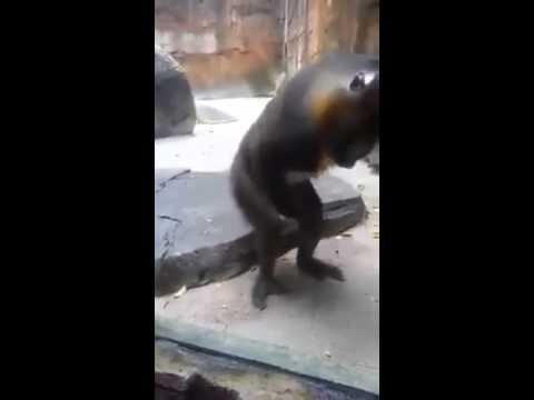 Hài Siêu Bựa Khỉ Sóc Lọ