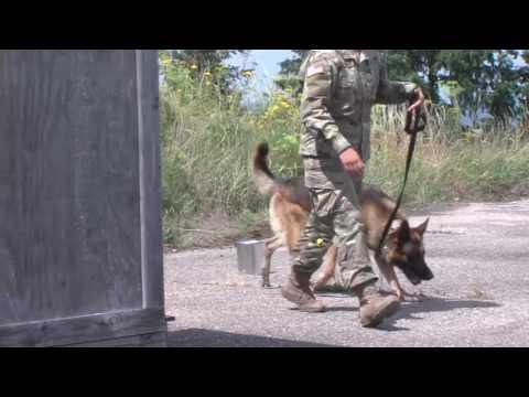 day-1-military-working-dog-training