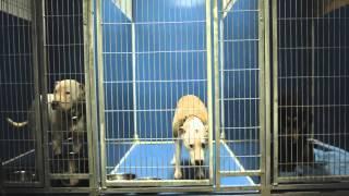 KC Pet Project - 2014 Paul Jolly Compassion Award Winners
