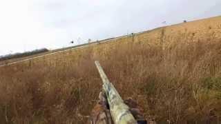 The Long Range 20 Gauge Wild Pheasant Load