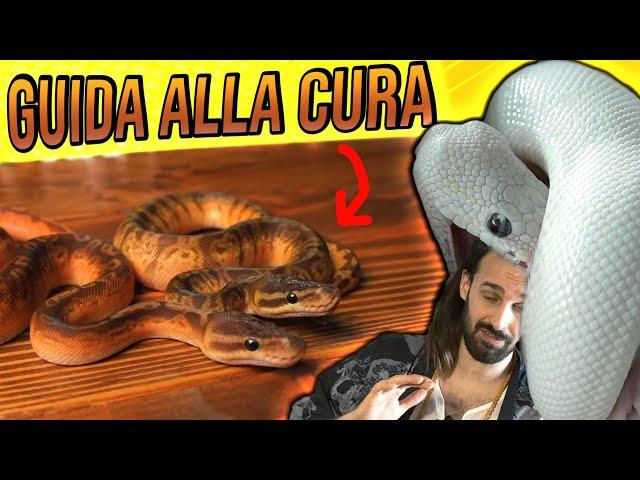 Pitone Reale - GUIDA ALLA CURA