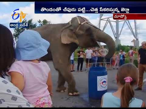 Elephant cleaning up the trash at Russia | Watch