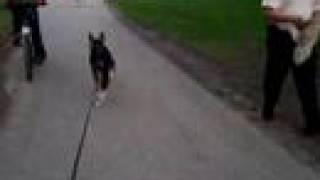 Jasper Bikejoring 26 April 2k8 - Earl Bales Park Toronto