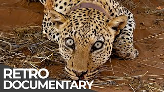 Extreme Jobs: Leopard Doctor, Crime Scene Cleaner, Helicopter Pilot | Retro Doc | Free Documentary