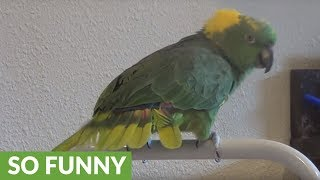 Talented parrot sings children's song for the camera