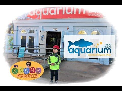 Quick Visit at the Santa Monica Aquarium
