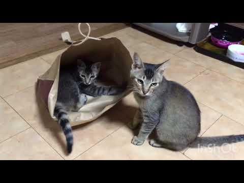 ジェジュンとジュンスは紙袋で遊ぶ笑