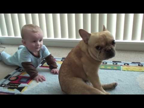 The Adventures of Charlie Bronson the French Bulldog and Baby