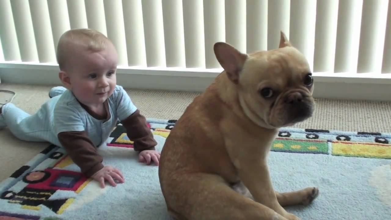 The Adventures Of Charlie Bronson The French Bulldog And Baby Youtube