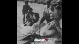 "shukar quartet ""murka swing"""