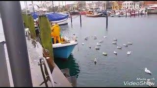 Покупаю у рыбаков рыбу.Солю селедку..