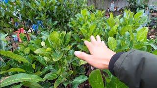 Bón Phân Lót Khi Mới Trồng Cây Mít Và Những Điều Cần Lưu Ý / Nhà Nông Làm Vườn