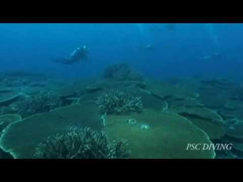 Marshall Diving(世界で一番のサンゴ礁)