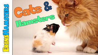 HOW TO KEEP HAMSTERS & CATS (or dogs) IN THE SAME HOME
