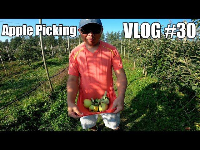 Apple picking at Abbotsford BC Canada Vlogs#30