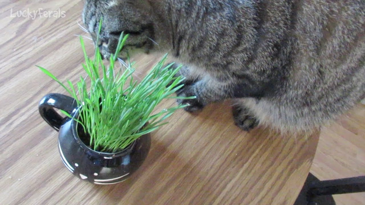 maxresdefault - How To Get Rid Of Mold On Cat Grass