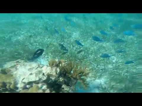 Pennekamp Coral Reef Park