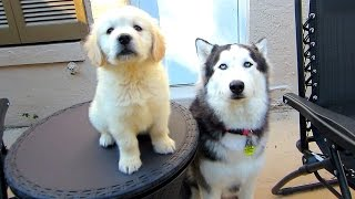 Cooper and Kya, more! (Update Vlog)