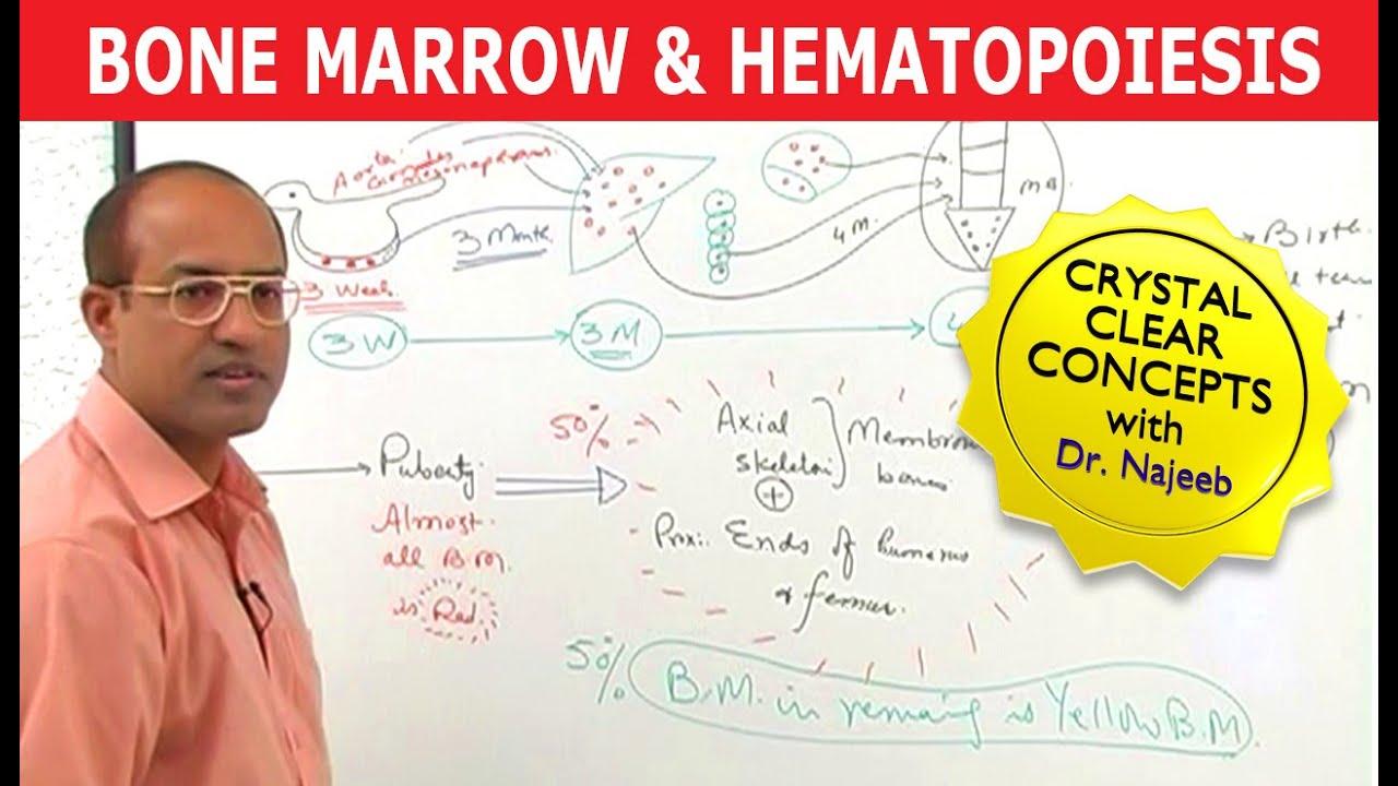 Bone Marrow & Hematopoiesis - Blood Cells Formation - YouTube