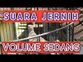 Burung Perkutut Lokal Suara Manggungnya Pas Buat Pancingan Merbok Kampung  Mp3 - Mp4 Download