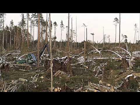 Tio år efter stormen Gudrun - Skogsbruket åter i balans