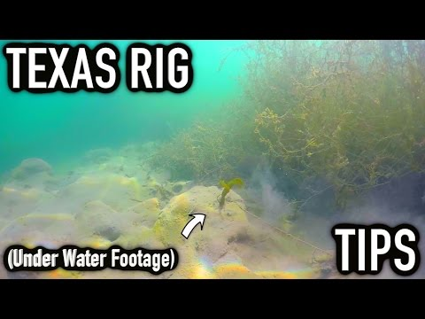 Bass Fishing Tips - Texas Rig