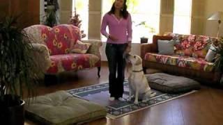 30 Day K9 Fitness Guide - Spot Sprints - Dog Treadmill Training
