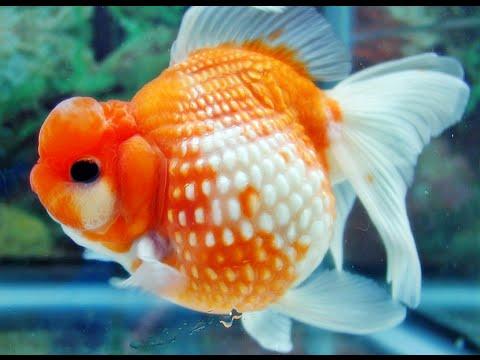 Download 106 Gambar Ikan Indah HD Gratis