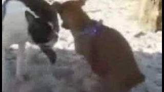 masturbating dog