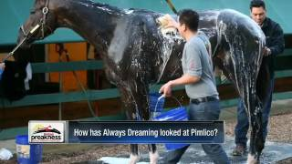 Donna Brothers talks Always Dreaming at the Preakness Stakes