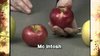 Gambar cover Learning About Apple Varieties