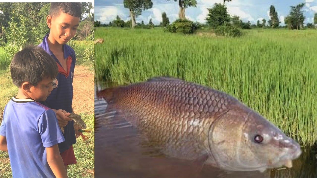 Wow amazing two young boys got a big fish using fishing for Fishing poles wow