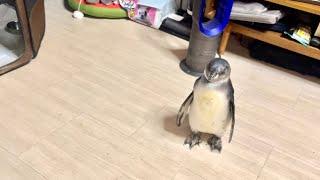 ママに置いていかれていじけたペンギンの取った行動に驚愕