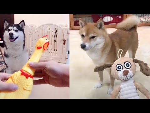 Dog Reaction to Dog Toy - Funny Dog Toy Reaction Compilation