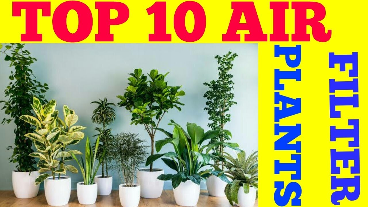 Top 10 Air Purifier Plant Filter Plants House For