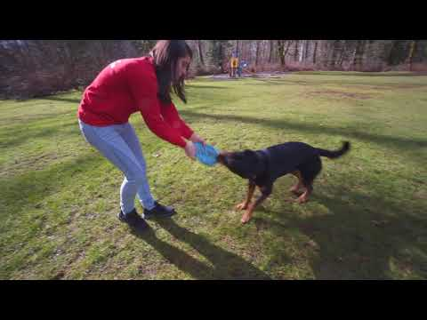Feeling 'ruff'? What to do when your dog won't fetch!