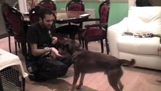 Dog Training Ideas: Veterinary And Care Giving Behaviours