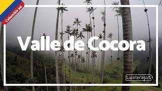 Valle de Cocora, las PALMAS mas altas del MUNDO!!! REALIDAD que parece FANTASÍA- Colombia #6