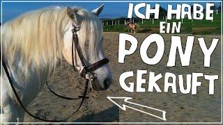Ich habe ein Pony gekauft - dieses Pony ist es geworden!