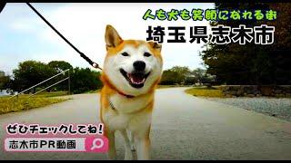 志木市ふるさとPR動画「犬目線編~犬にも人にもやさしいまち志木~」