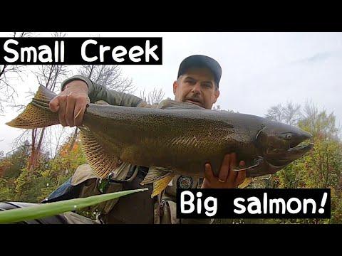 Lake Ontario Tributary Salmon Fishing
