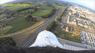 Eagle flight from balloon
