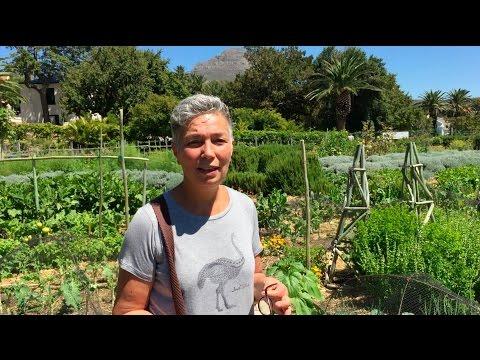 Rod Suskins World: Sheryl Ozinsky at the Oranjezicht City Farm