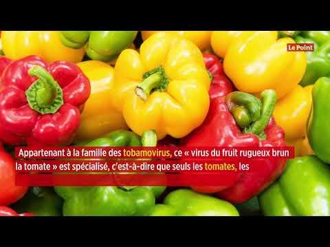 Les tomates menacées par un nouveau virus