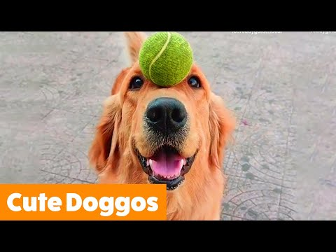 Cute Funny Doggos | Funny Pet Videos