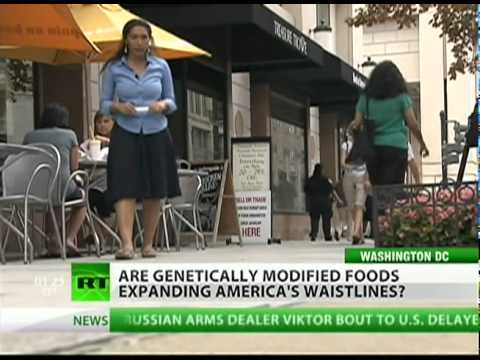 GMOs making Americans fat?