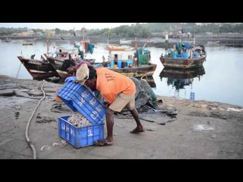 A Day With The Fisher Folk Of Bombay