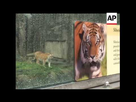 The parents of a teen who was killed by a tiger at the San ...